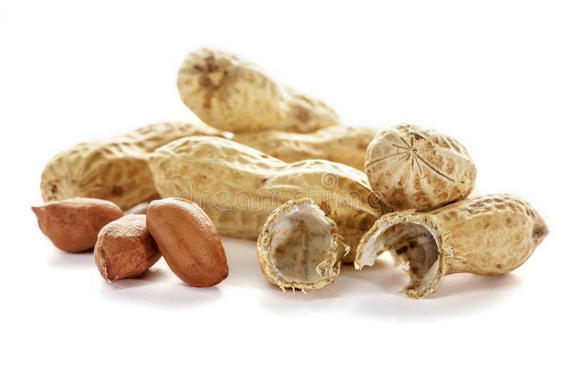 Unbehandelte Erdnüsse lokalisiert auf weißem Hintergrund erdnuß stockfotografie