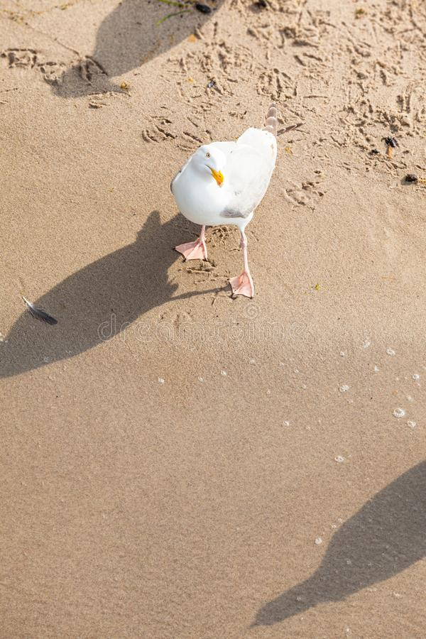 Unbeholfen sehend neugieriger Vogel stockbilder