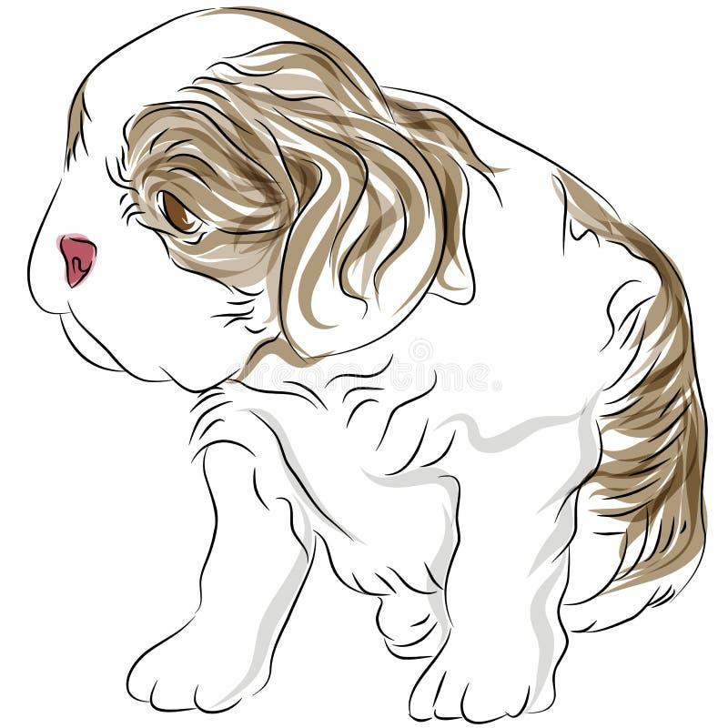 Unbekümmerte Königcharles Spaniel-Welpen-Hundezeichnung stock abbildung