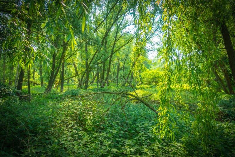 Unberührte Natur im Sonnenschein lizenzfreie stockfotografie