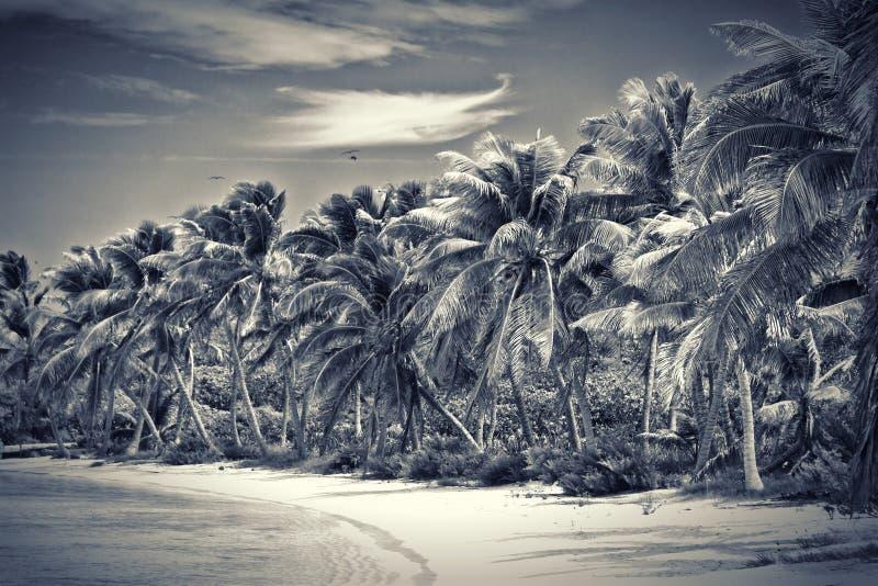 Unberührter tropischer Strand in Mexiko stockfotografie