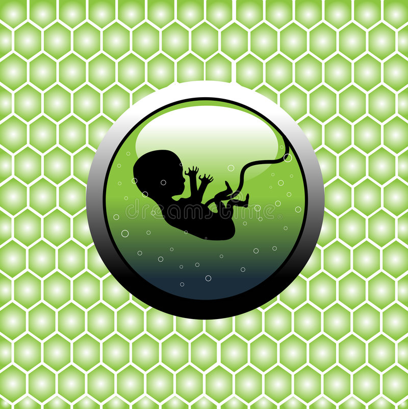 Unborn baby royalty free illustration