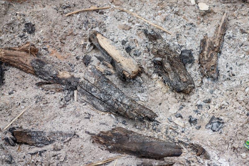 Unburned rest av trä i askaen, selektiv fokus royaltyfria foton