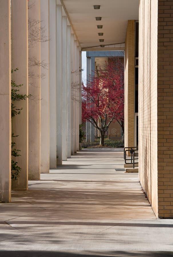 UNCA Campus stockbild