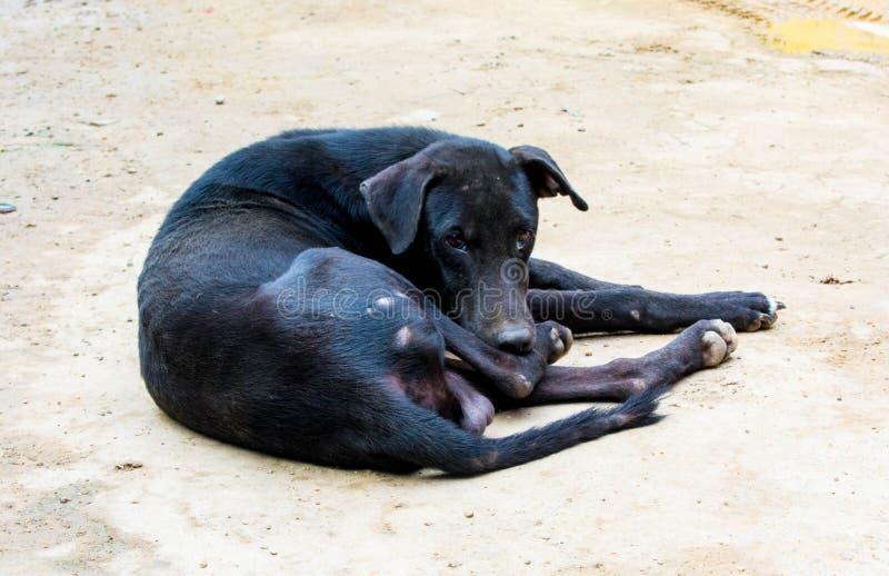 Uncared et chien noir sous-alimenté de rue images libres de droits