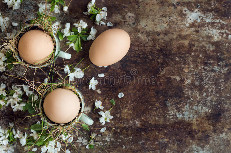 Uncolored natural easter eggs in green espresso cups, happy easter concept with white spring flowers royalty free stock photo
