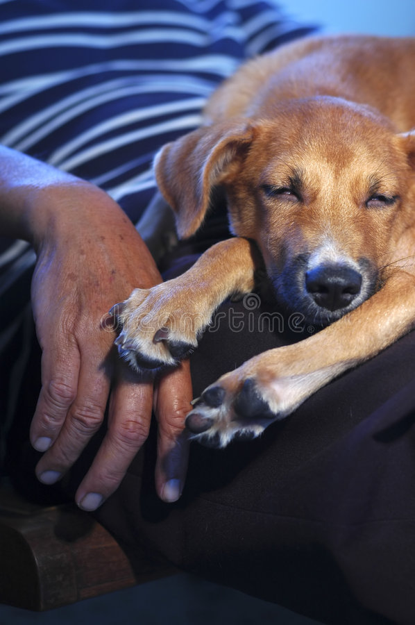 Unconditional Love royalty free stock photos