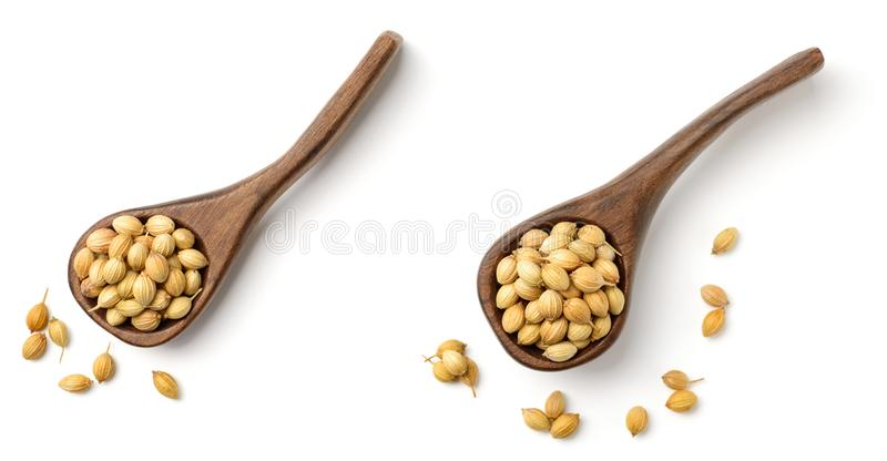 Uncooked coriander seeds in the wooden spoon, isolated on white, top view stock image