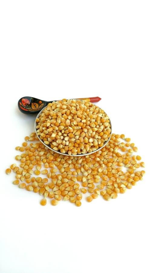 uncooked popcorn royaltyfri foto