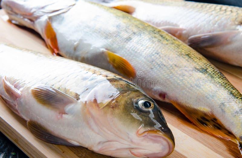 Uncooked ryba na tn?cej desce w posi?ku przygotowania poj?ciu zdjęcia stock