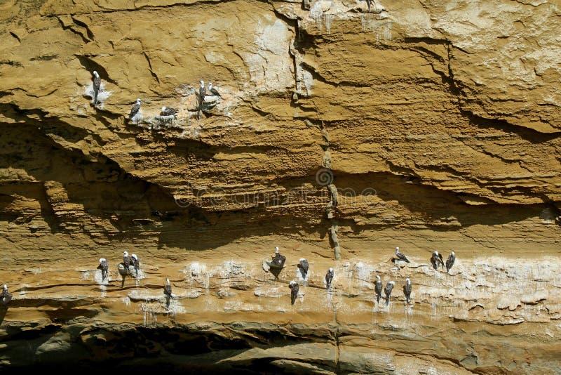 Uncountable одичалые птицы садясь на насест на своде Catedral Ла или соборе, известной горной породе на национальном заповеднике  стоковые фото