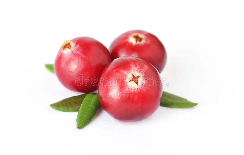 Uncultivated forest cranberries. Isolated on white background stock images