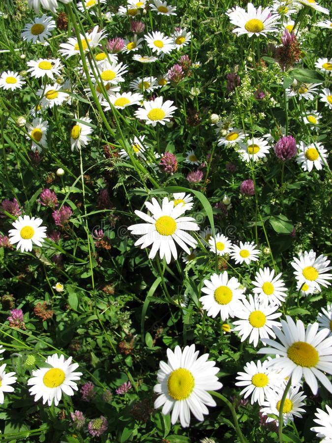 Uncut meadow in may stock photo
