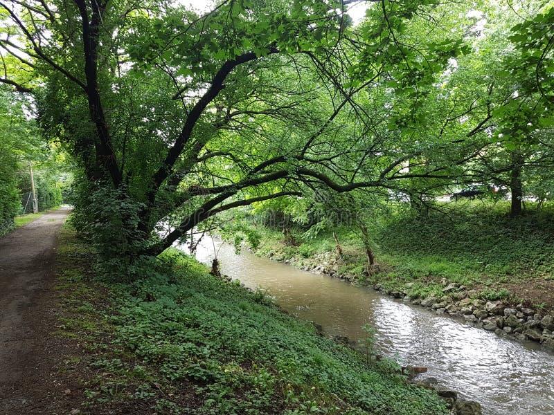 Und Fluss di Baum fotografie stock libere da diritti