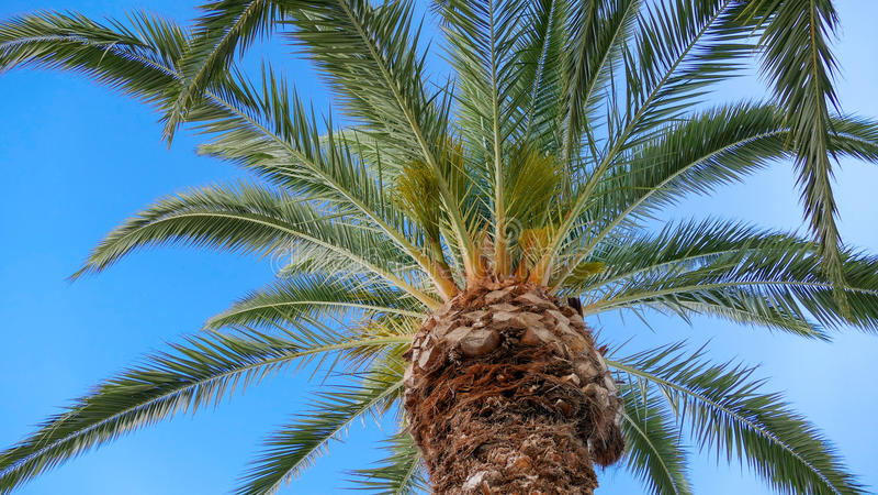 Unde i precedenti della palma fotografia stock