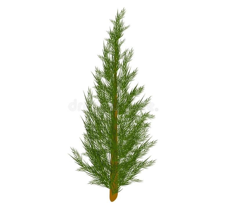 Undecorated Christmas Tree 2 royalty free stock images