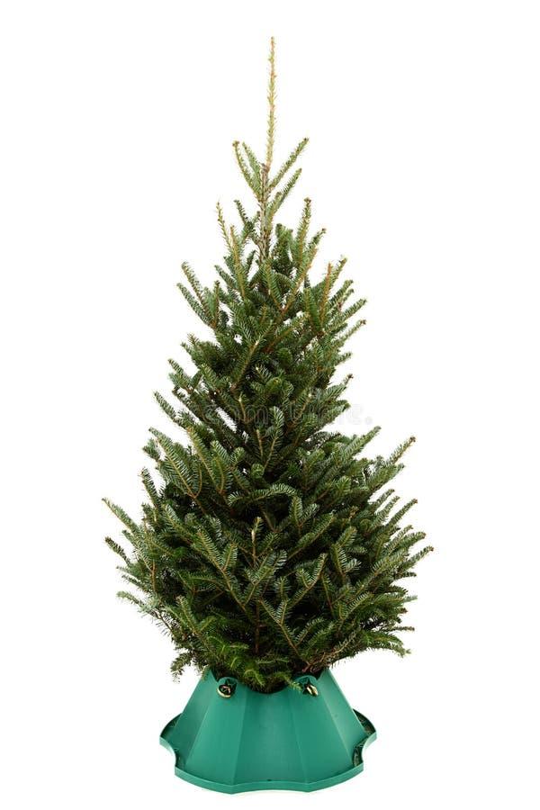 Undecorated Weihnachtsbaum im grünen Plastikstandplatz lizenzfreie stockfotografie