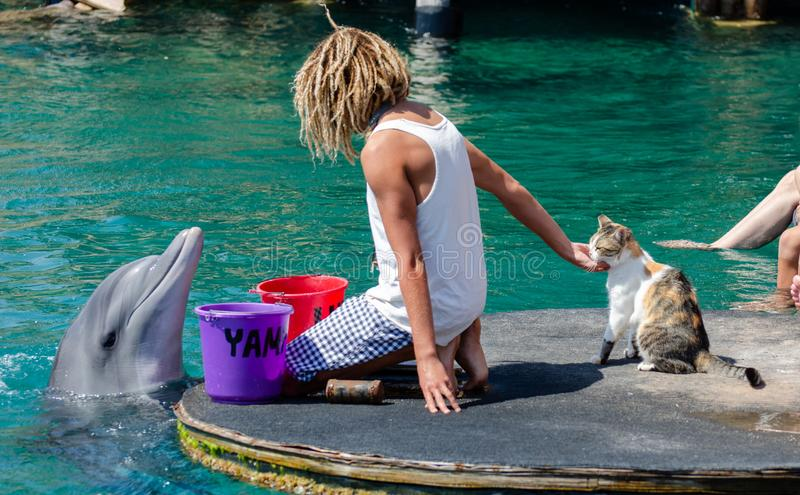 The undefined trainer feed the dolphins at the Dolphin Reef in Eilat. And cat looking on that royalty free stock photos