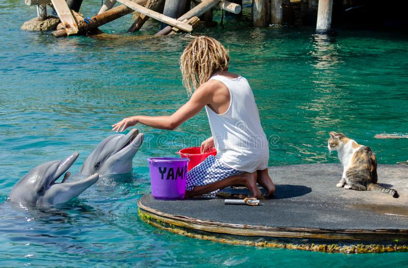 The undefined trainer feed the dolphins at the Dolphin Reef in Eilat. And cat looking on that stock image