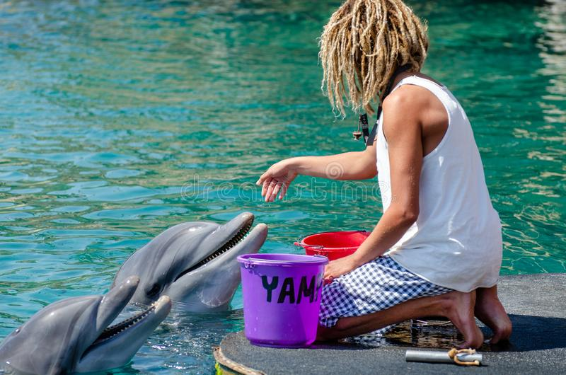 The undefined trainer feed the dolphins at the Dolphin Reef in Eilat. Israel stock images