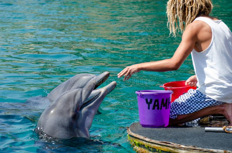 The undefined trainer feed the dolphins at the Dolphin Reef in Eilat. Israel royalty free stock photos