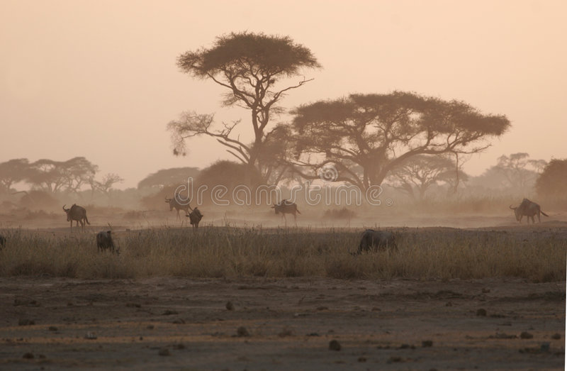Download Under The Acacia Trees Royalty Free Stock Photo - Image: 7053575