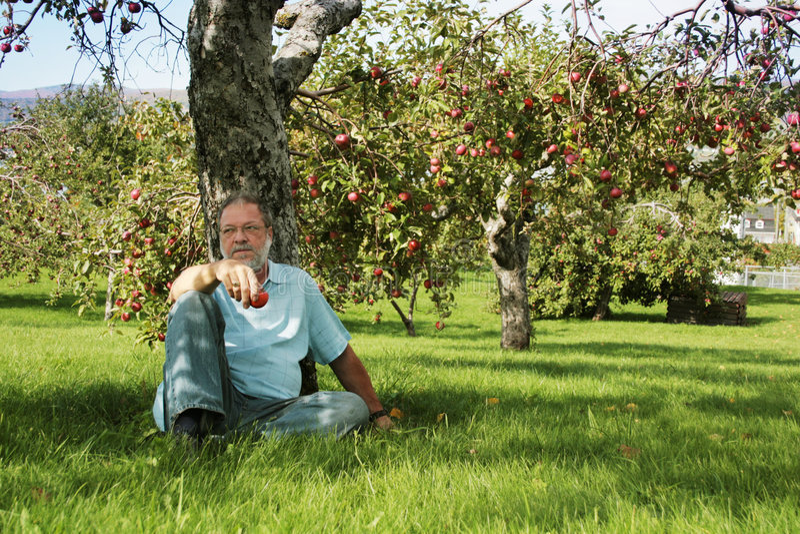 Under the apple tree stock photos