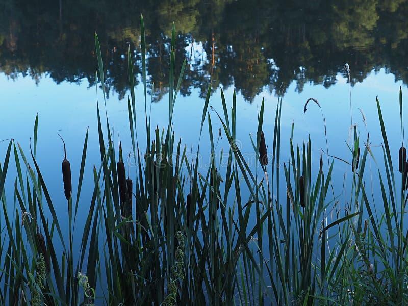 Under av naturen och den klara sjön, som reflekterar ljusstyrkan royaltyfri bild