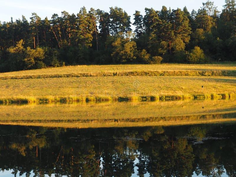 Under av naturen och den klara sjön, som reflekterar ljusstyrkan royaltyfria bilder
