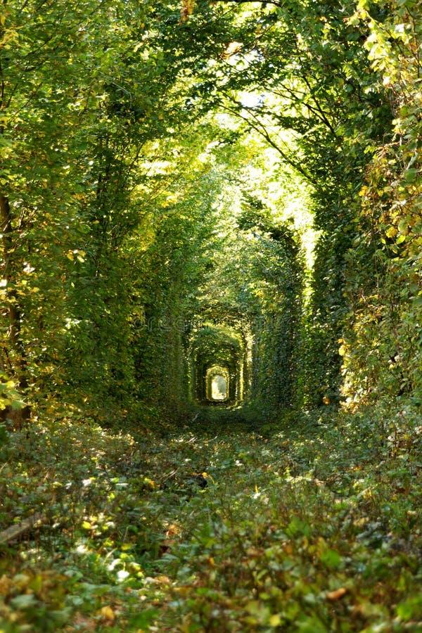 Under av naturen - verklig tunnel av förälskelse, gröna träd och järnvägen, Ukraina arkivbild