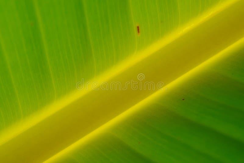 Under Banana Leaf and sun light stock photos
