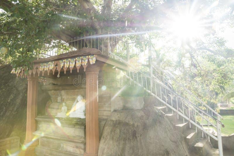 Under the bodhi tree, Isurumuniya Temple, Anuradhapura, Sri Lank. Light shining through the bodhi tree stock images