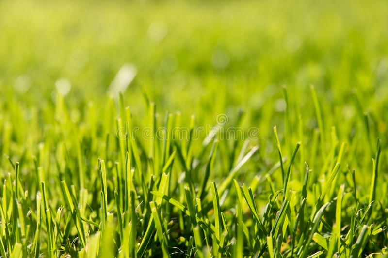 Under the bright sun abstract natural backgrounds. Under the bright sun. Abstract natural backgrounds, grass, nature, green, park, summer, fresh, lawn, field royalty free stock photography