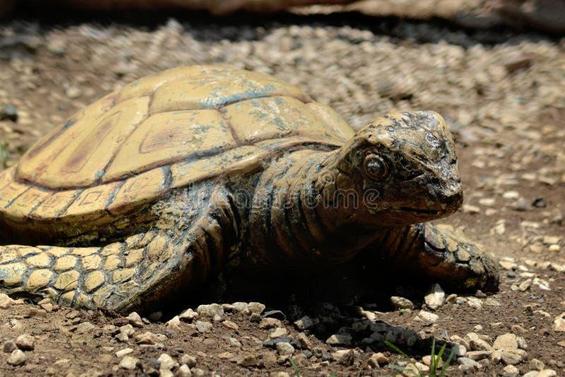 Under divine care turtles swim shoot royalty free stock image