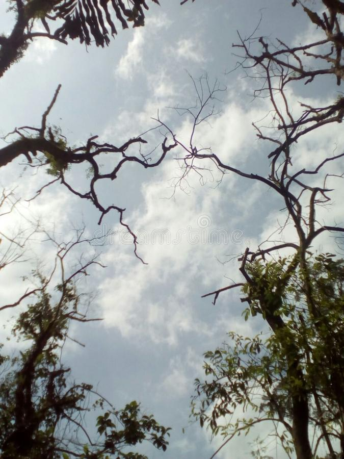 Under djungeln fotografering för bildbyråer