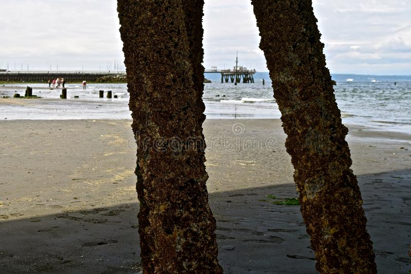 Under the Docks. Low tide at Edmonds Beach in Washington state, allows access under the docks stock images
