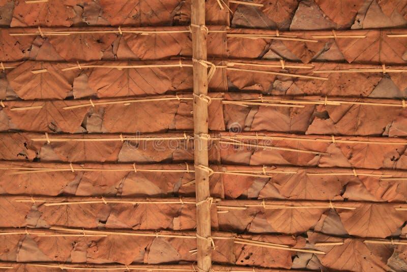 Under dry leaf roof stock image
