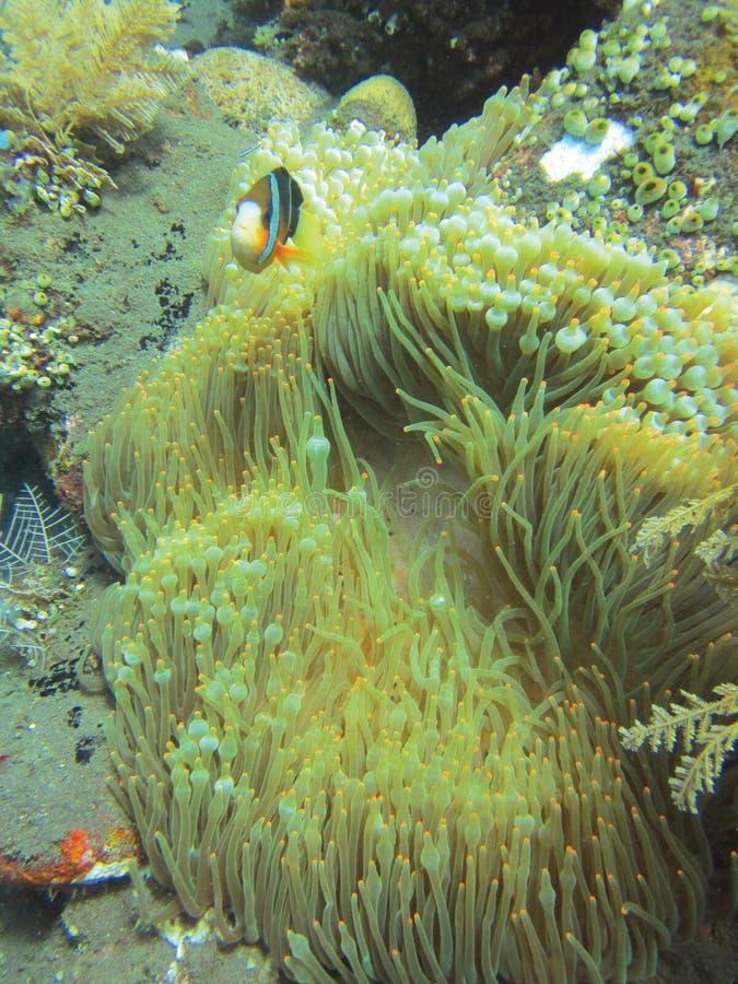 Under havet arkivfoto