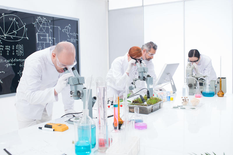 Download Under Microscope Analysis Stock Images - Image: 31258544