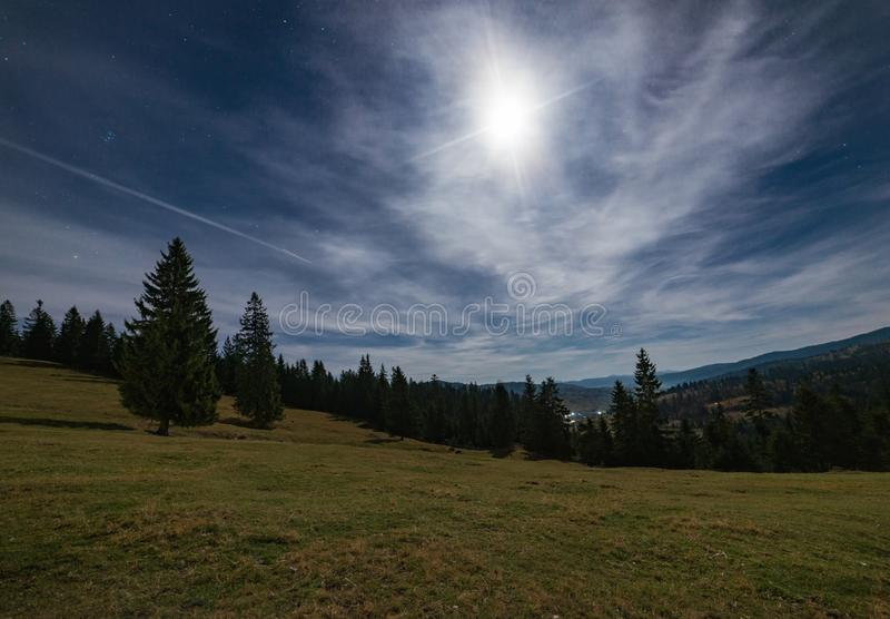 Under the moonlight in the pine forest stock photos