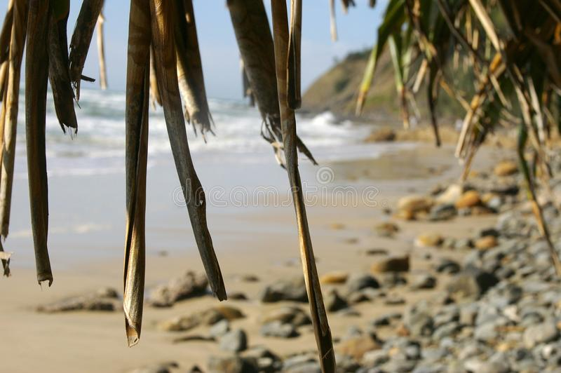 Under the Pandanus II stock photography