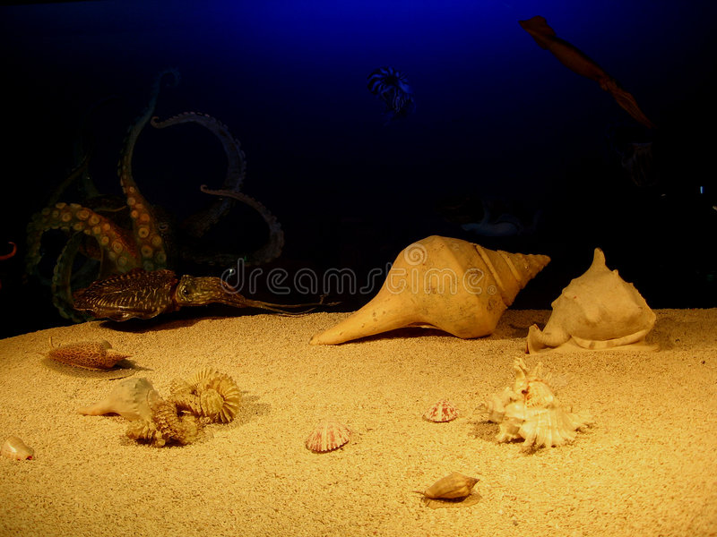 Under the sea royalty free stock photography