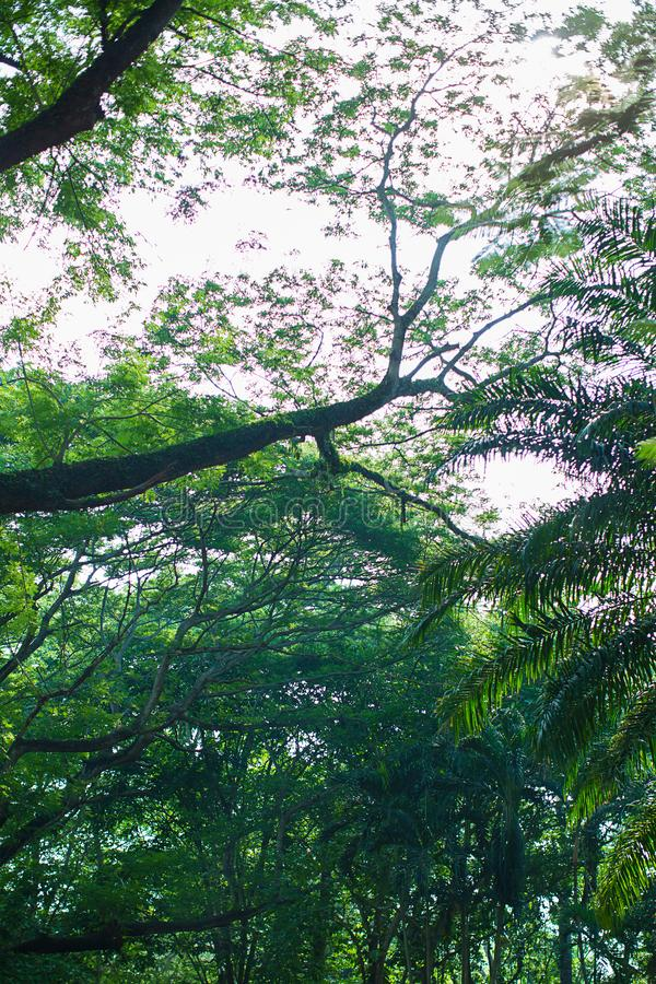 Under shade of giant tree from bottom view. can be use to natural background, stock image