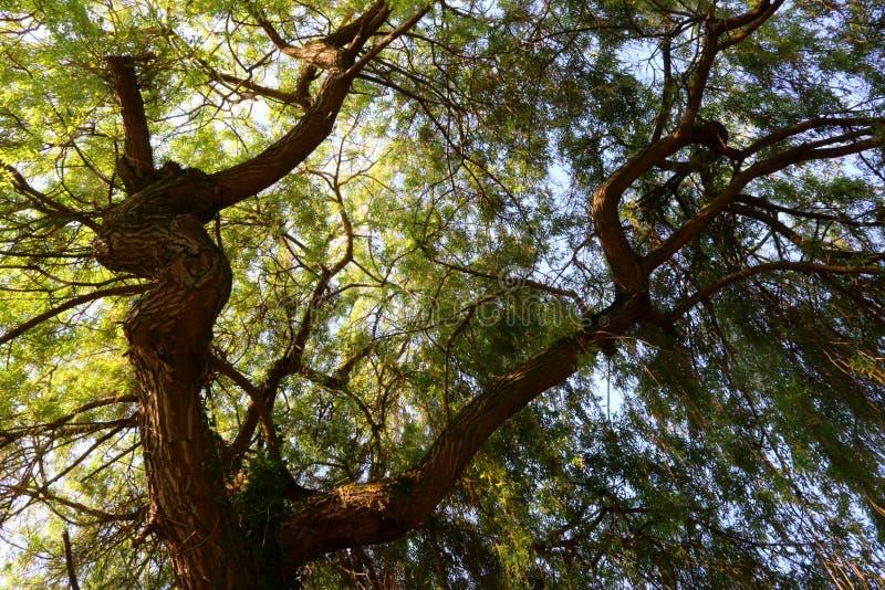 Under solljuset översvämmat grönt tak av en gammal pil royaltyfri bild
