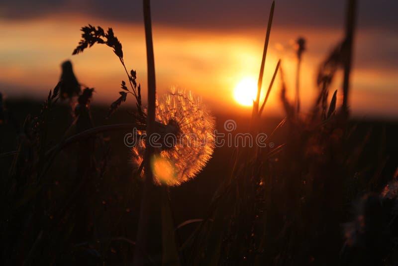 Under solnedgången arkivbilder