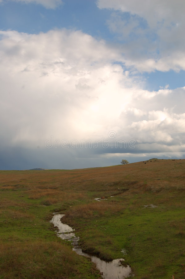 Under a stormy sky. Stream and tree under a stormy sky stock image
