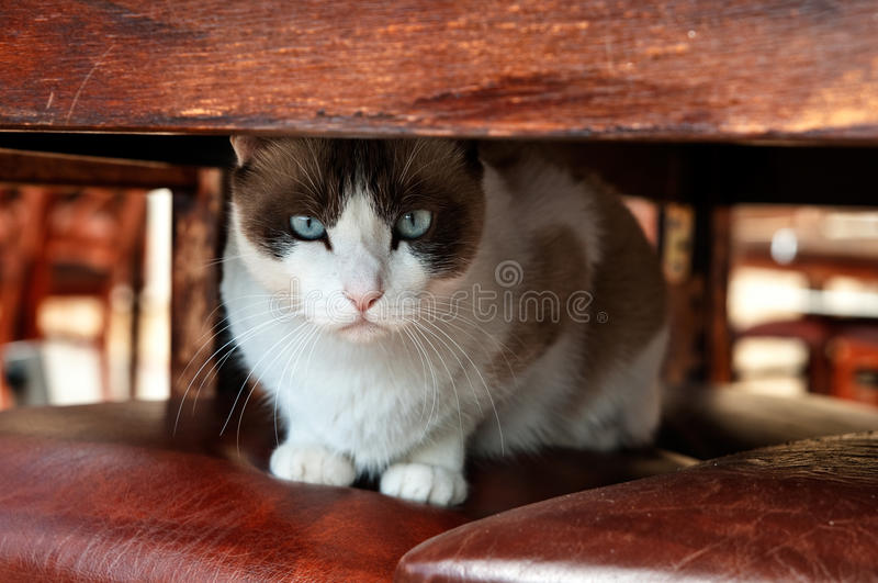 Under the table royalty free stock image