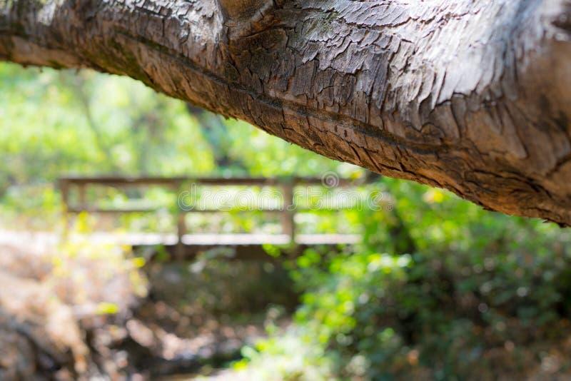 Under träbrosikt arkivbilder