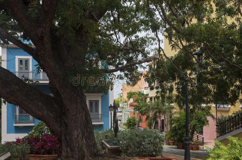 Under Tree Canopy at Cathedral Plaza. Under canopy of tree at cathedral plaza in old san juan and businesses lining street stock image