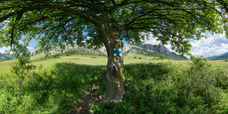 Under the tree shade stock image